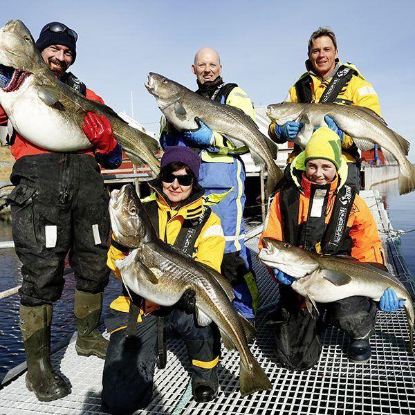 Angelreisen Norwegen 42441-442 Flatanger Guiding-Touren Dorsche