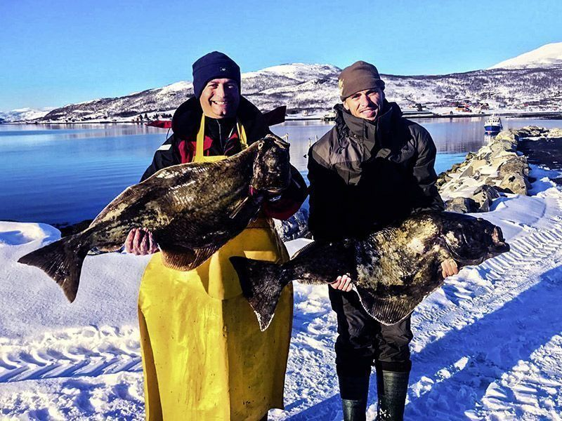 Angelreisen Norwegen 43700 Dåfjord Havfiske Heilbutt