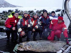 Angelreisen Norwegen 43700 Dåfjord Havfiske Heilbutt3