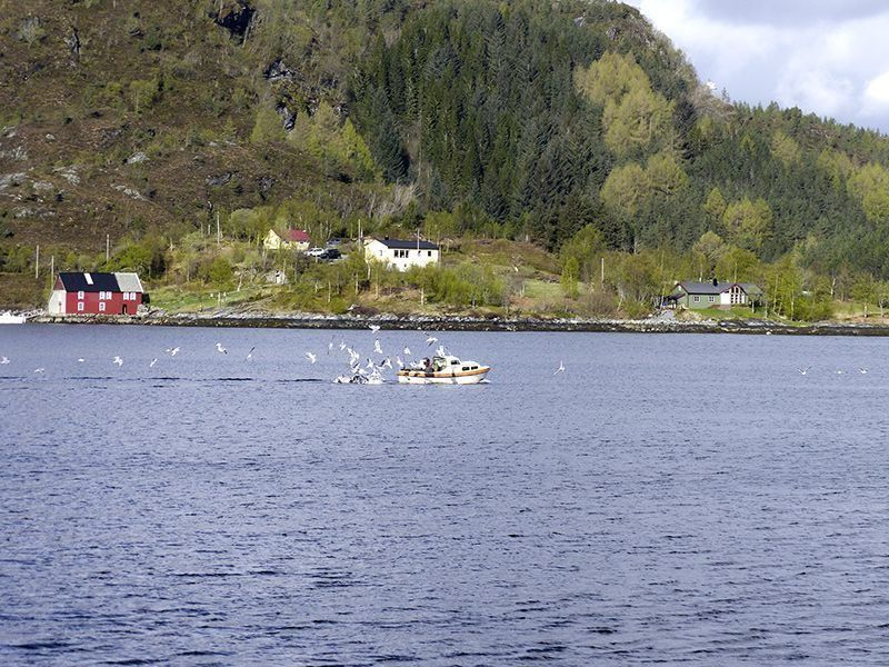 Angelreisen Norwegen 41491-41510 Skottneset Feriesenter Kutter