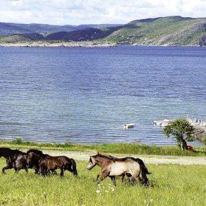 Angelreisen Norwegen 42306-310 Gangstøstranda Pferde