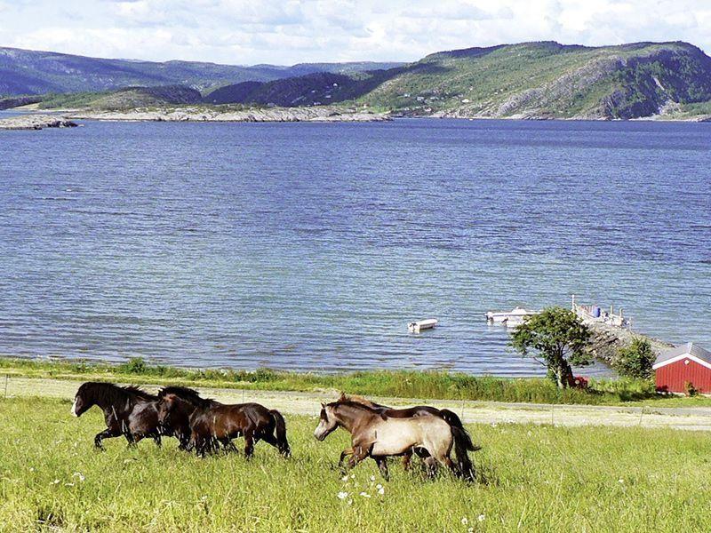Angelreisen Norwegen 42306-42310 Gangstøstranda Pferde