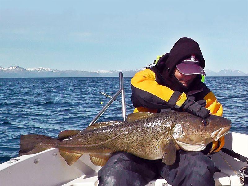 Angelreisen Norwegen 43200-250 Hamarøy Fiskecamp Dorsch