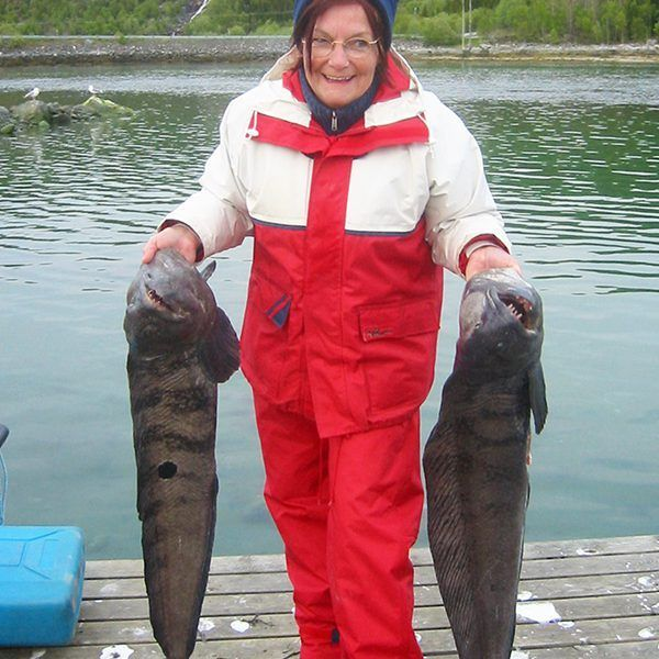 Angelreisen Norwegen 43200-250 Hamarøy Fiskecamp Steinbeißer