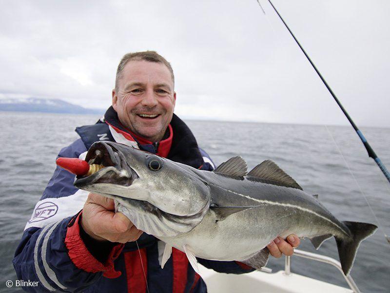 Angelreisen Norwegen 43601-603 Hansnes Havfiske Köhler Blinker