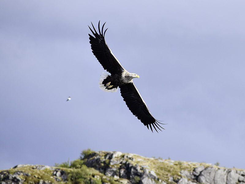 Angelreisen Norwegen 42451-42464 Flatanger Rorbuer Adler