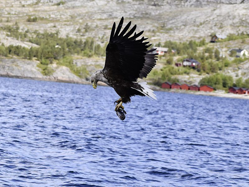 Angelreisen Norwegen 42401-42420 Bessaker Adler