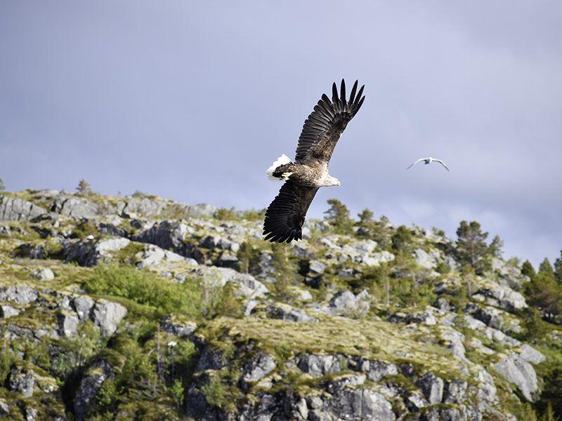 Angelreisen Norwegen 42401-420 Bessaker Adler