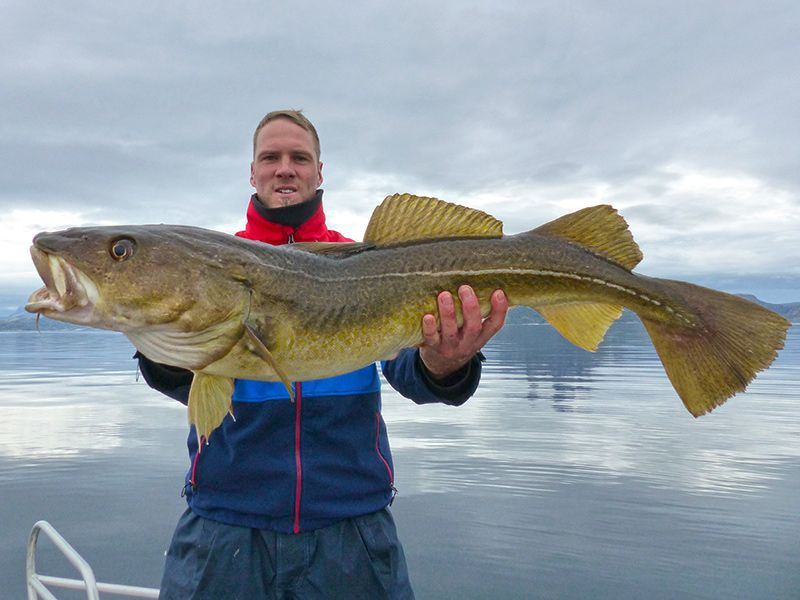 Angelreisen Norwegen 43411-43424 Sommersel Fishing Camp Dorsch
