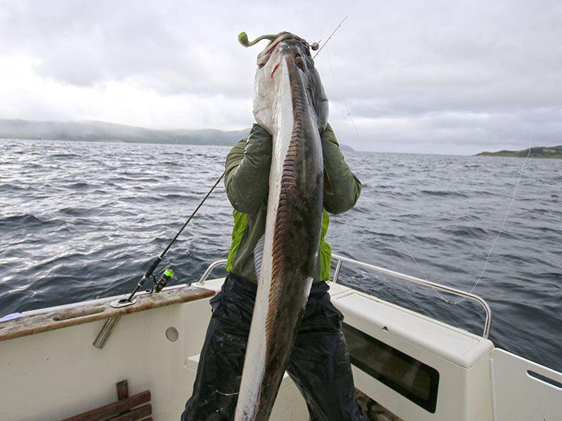 Angelreisen Norwegen 43601-43603 Hansnes Havfiske Heilbutt