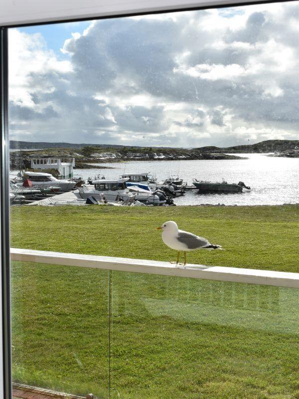 Angelreisen Norwegen 42037 Kjevikan Sjøferie Blick auf den Hafen