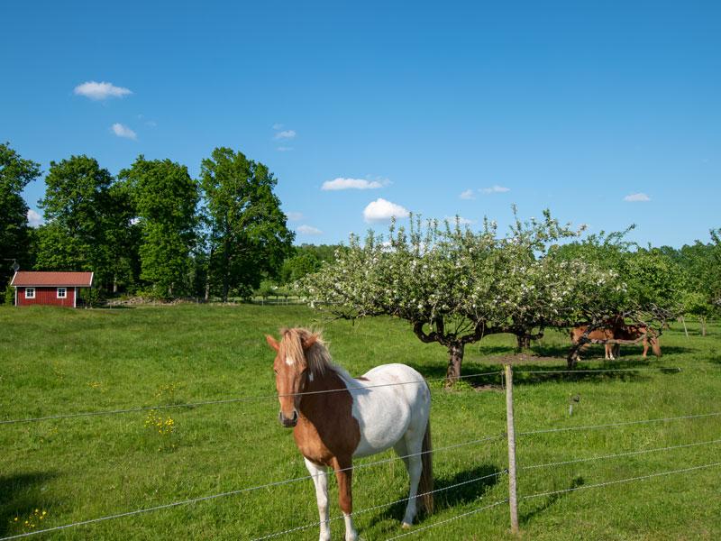 Angelreisen Schweden 7051-7053 Ferienhäuser Urshult Pony