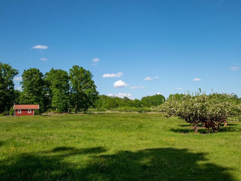Angelreisen Schweden 7051 Ferienhäuser Urshult Panorama